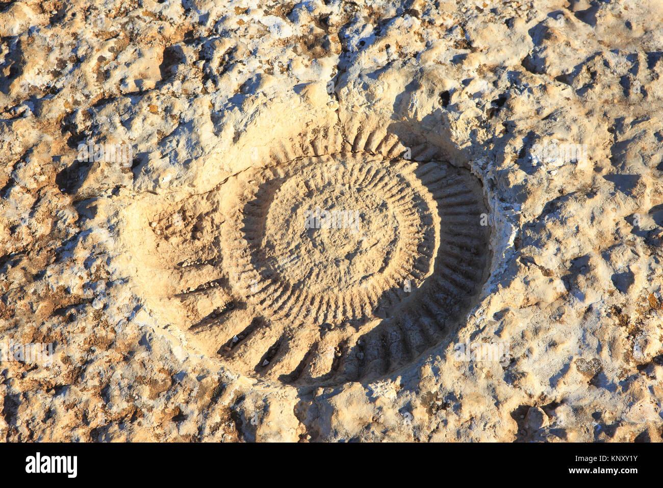 Primer plano de un ammonites fosilizados de la época Jurrasic en El Torcal de Antequera reserva natural, ubicado al sur de la ciudad de Antequera, España Foto de stock