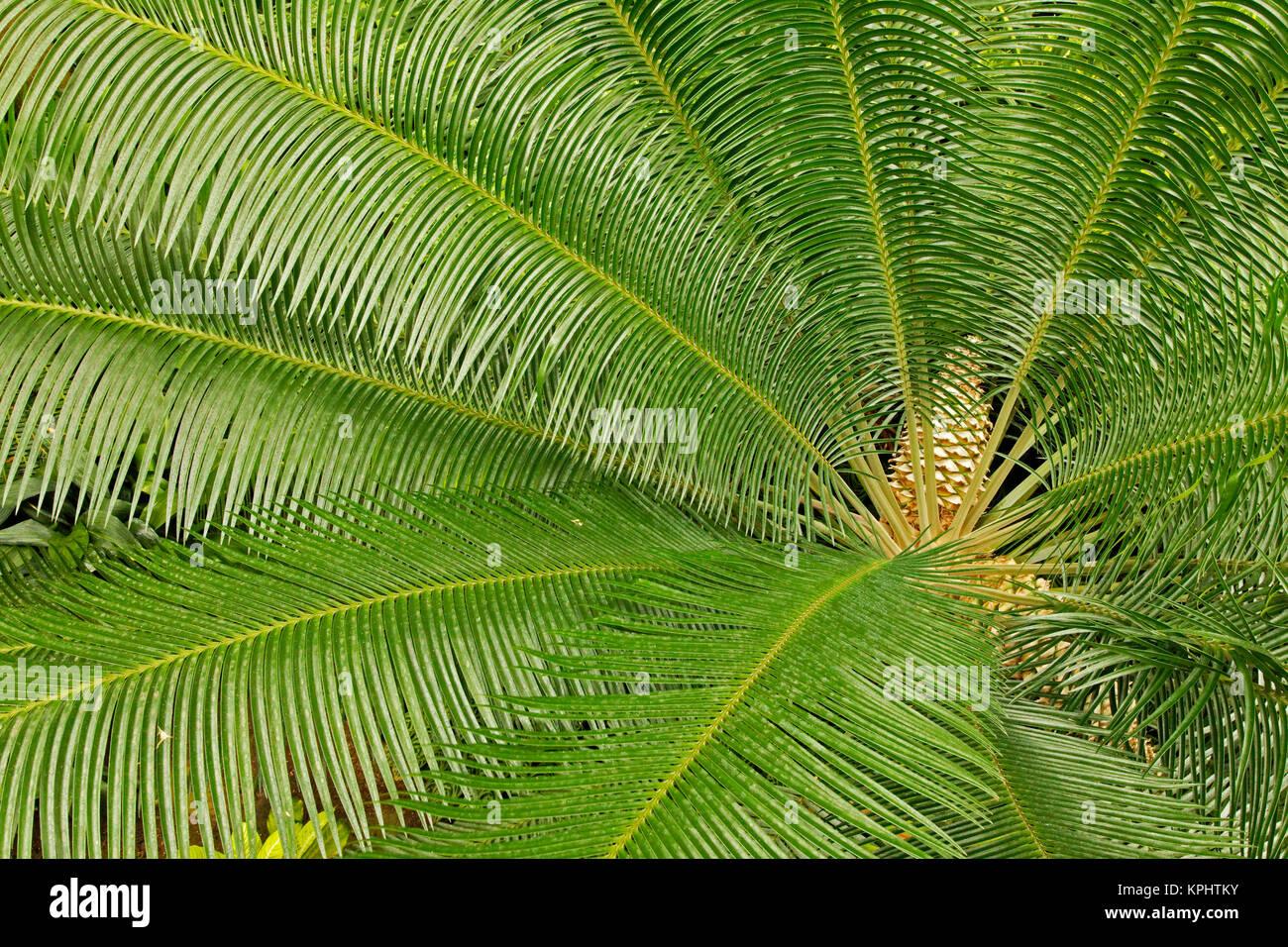 Patrón de plantas tropicales, jardines de Longwood, PA Foto de stock