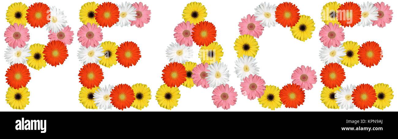 Paz paz paz de flor cortada de la naturaleza sobre blanco Imagen De Stock