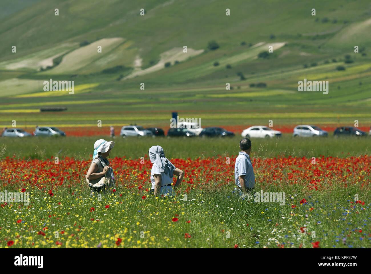 Visitantes en los campos floridos de Castelluccio di Norcia, Pian Grande, Parque Nacional de las montañas Sibillini, Imagen De Stock