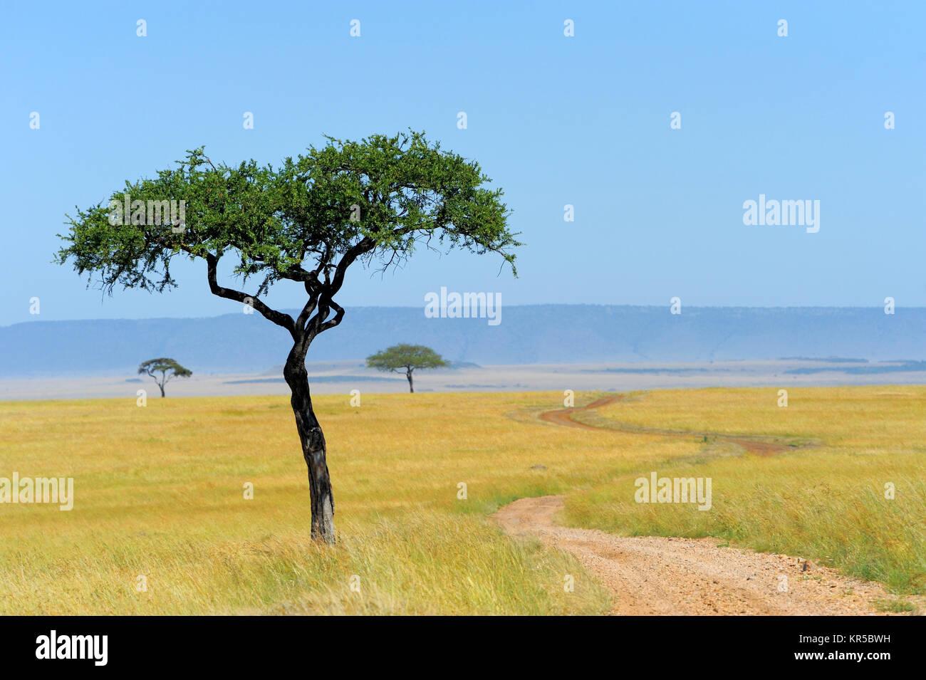 Paisaje de sabana en el parque nacional en Kenya Imagen De Stock
