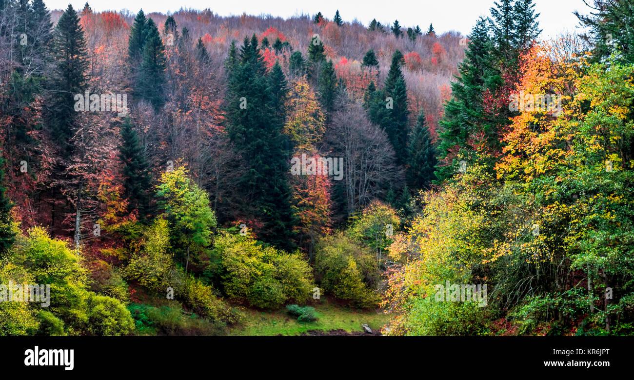 Bosque del otoño Imagen De Stock