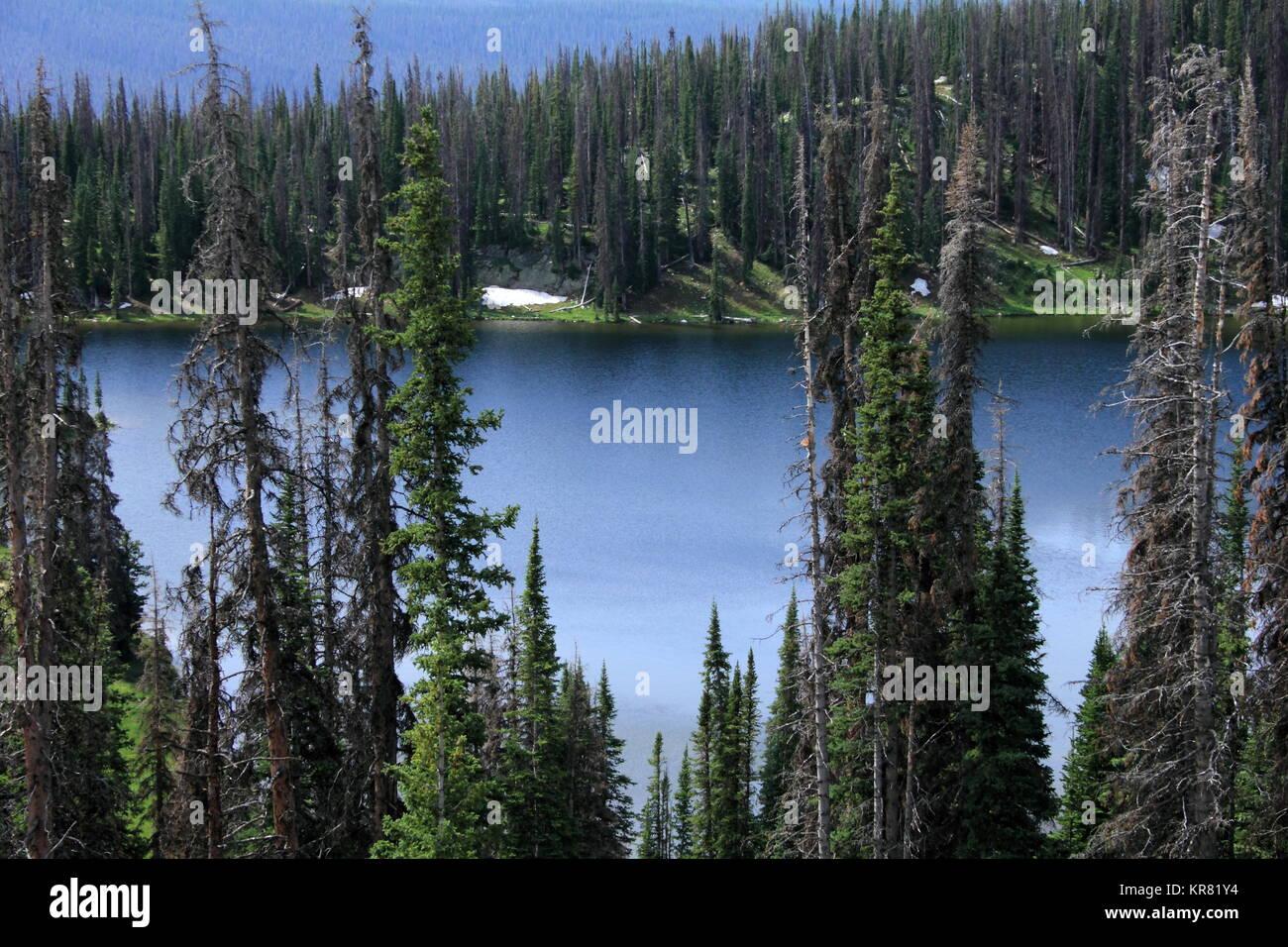 El lago en Wyoming, rodeado por pinos muertos. La infestación del escarabajo de pino de montaña. Foto de stock