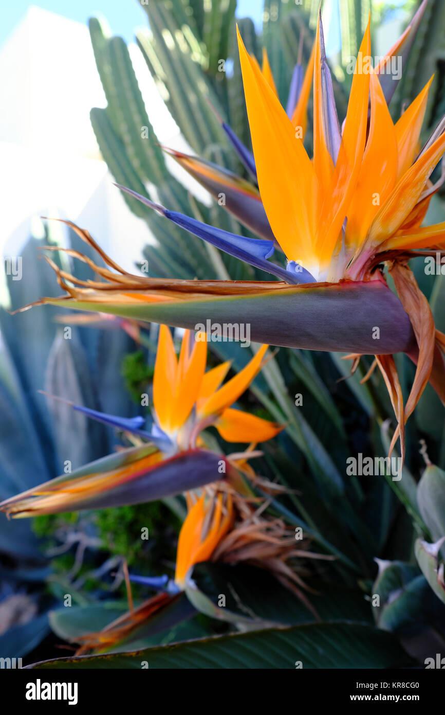 Los Feliz barrio de Los Angeles, California, EE.UU. Kathy DEWITT Imagen De Stock