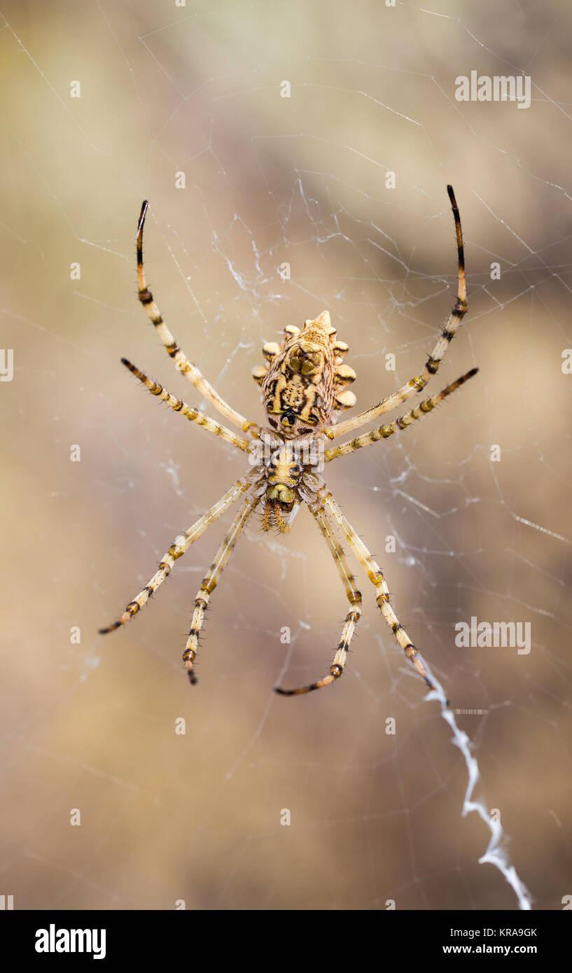 Araña en su web. Imagen De Stock