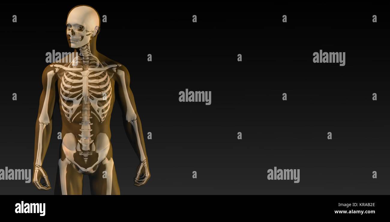Transparente con la estructura ósea humana Foto & Imagen De Stock ...