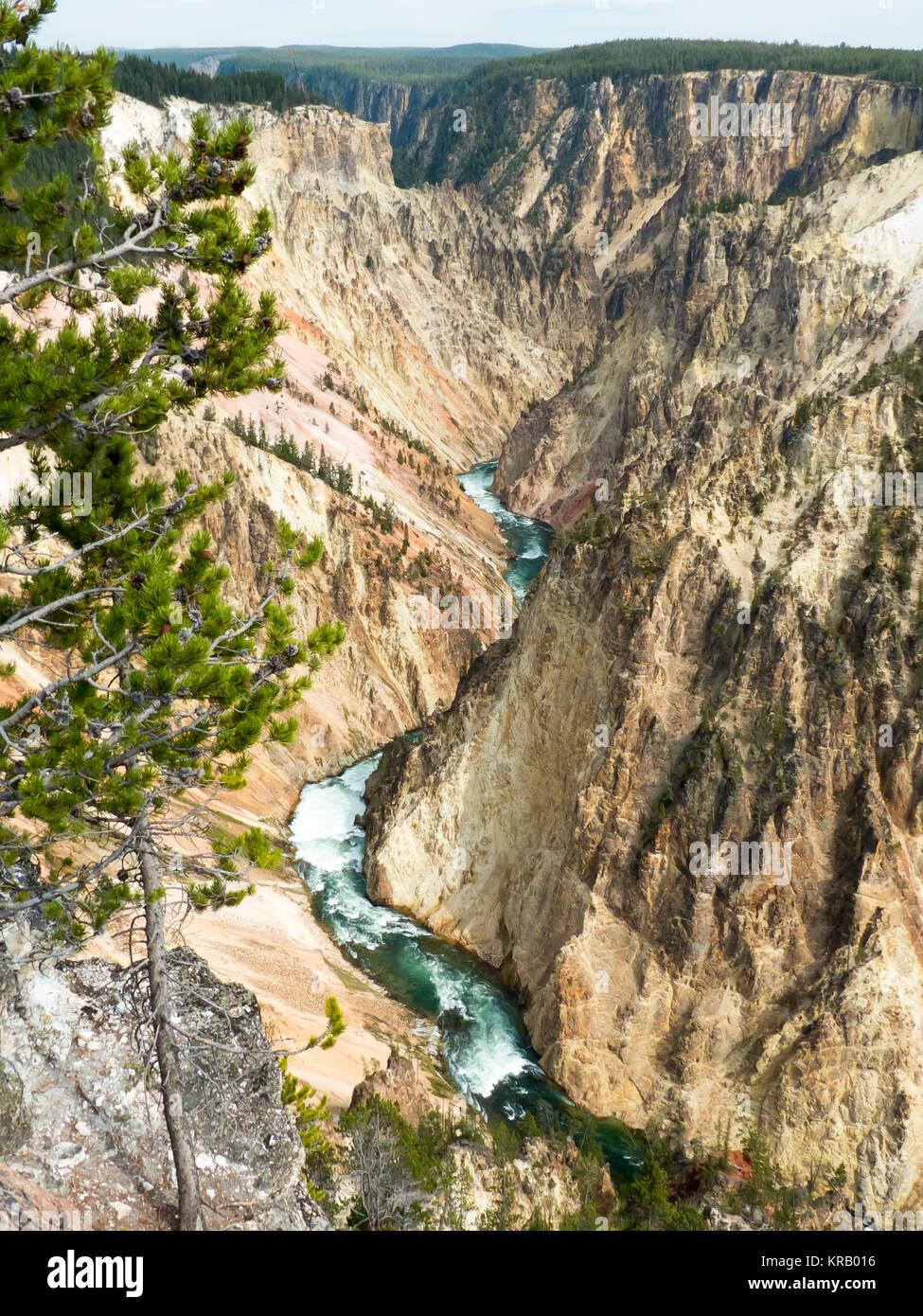Parque Nacional Yellowstone, Wyoming: Yellowstone cañón desde el norte Rim Drive Imagen De Stock
