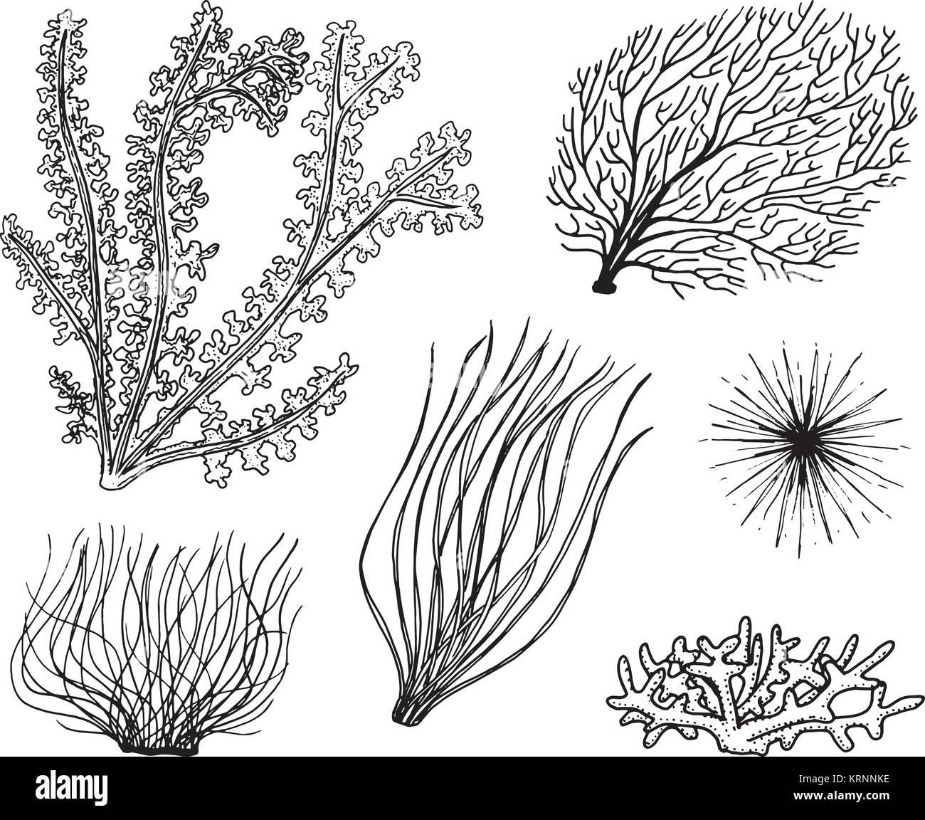 Plantas Marinas Algas La Vida Vegetal Y Alimentos Para