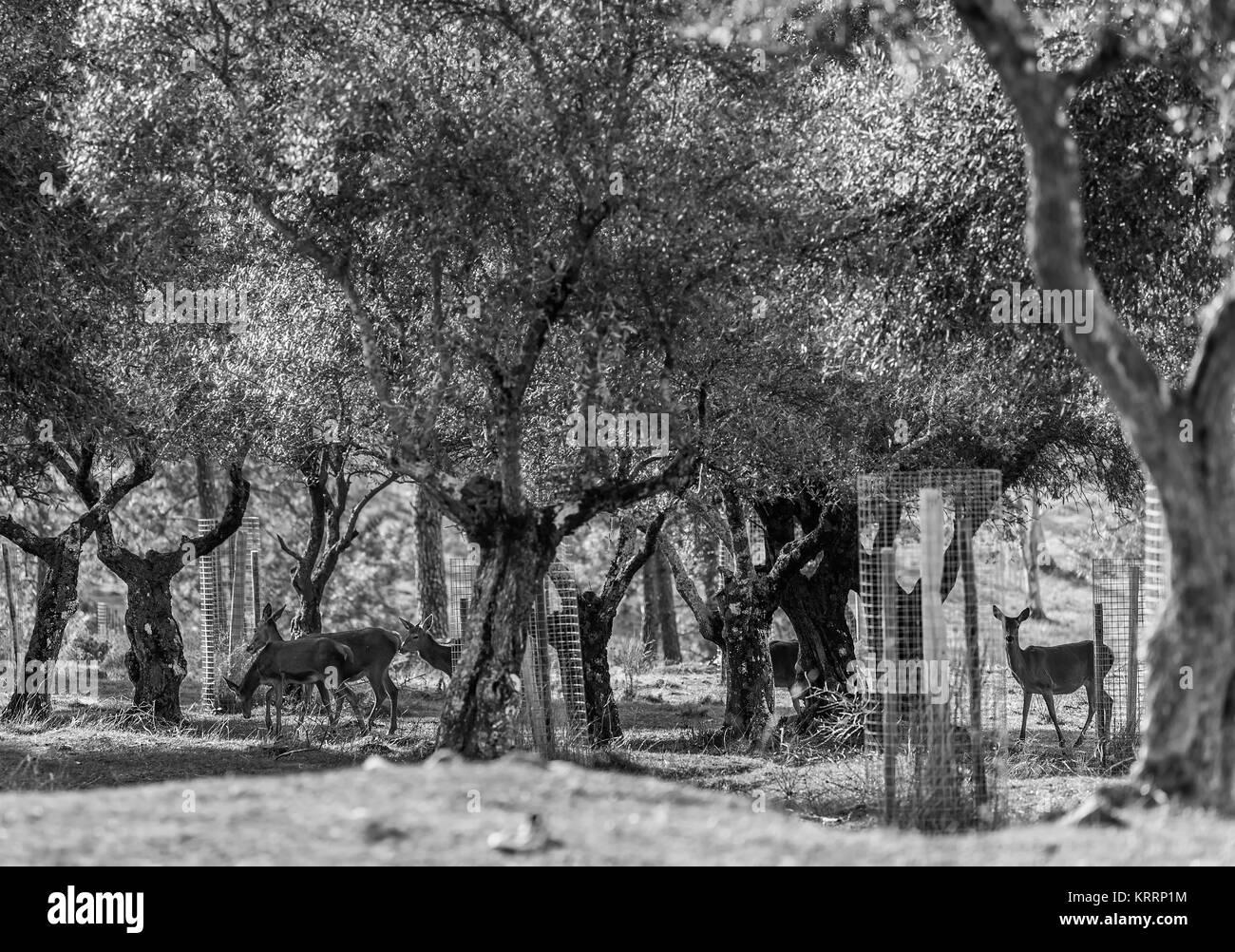 La vida silvestre en el olivar. Imagen De Stock