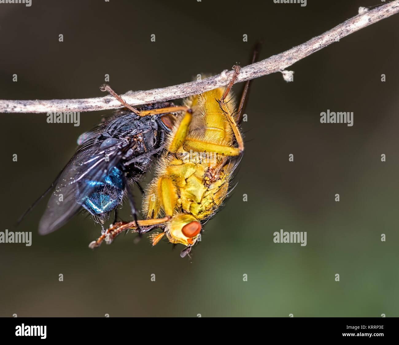Los insectos fotografiados en su entorno natural. Foto de stock