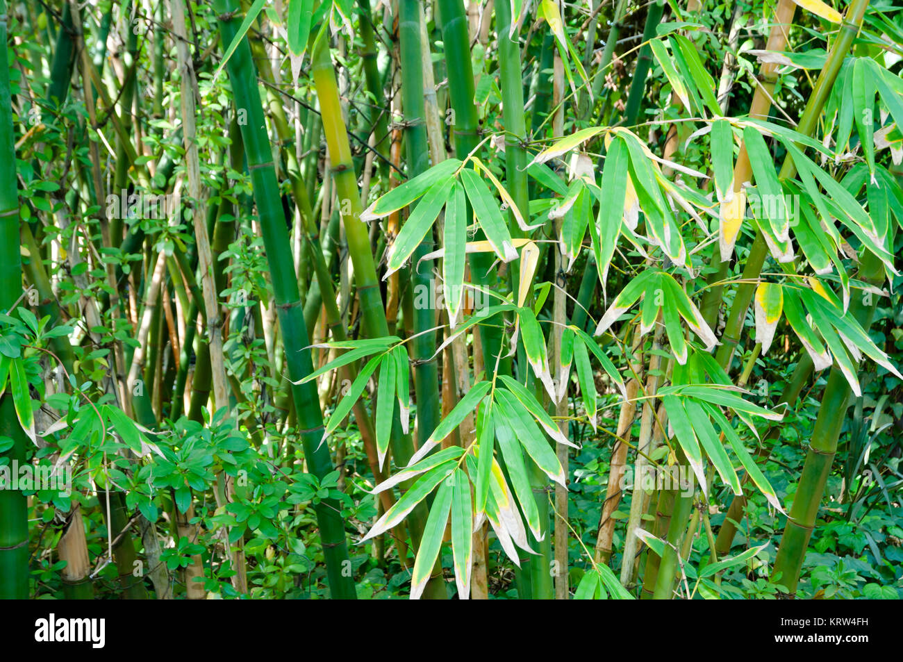 Palos De Bambu Bosque Foto Imagen De Stock 169582773 Alamy - Palos-de-bambu
