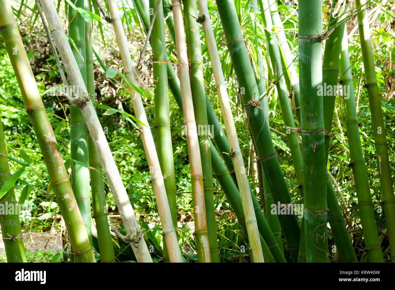 Palos De Bambu Bosque Foto Imagen De Stock 169582809 Alamy - Palos-de-bambu