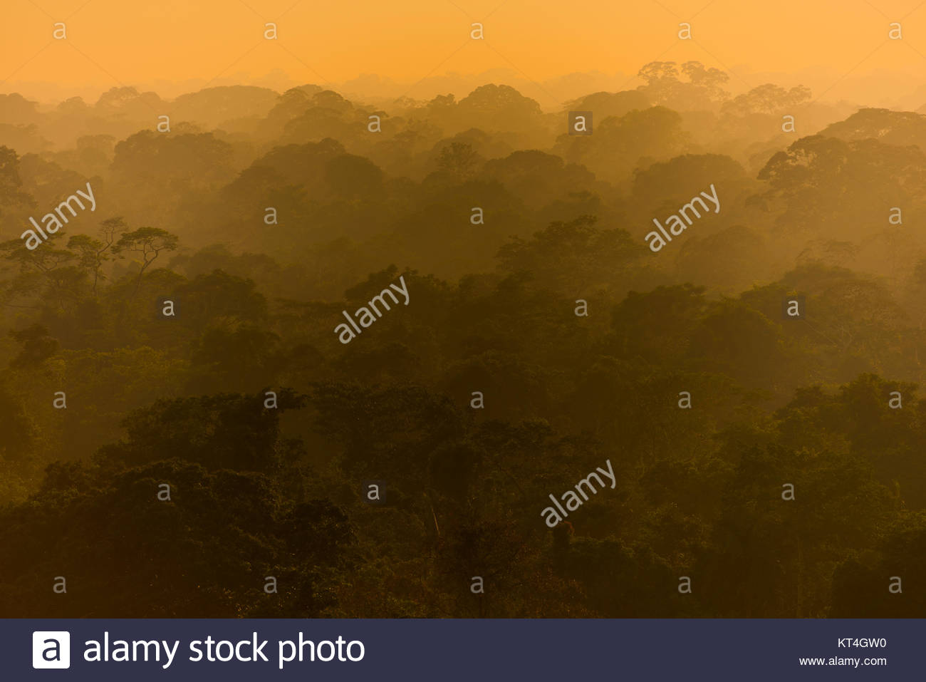 Amazon Rainforest canopy Imagen De Stock