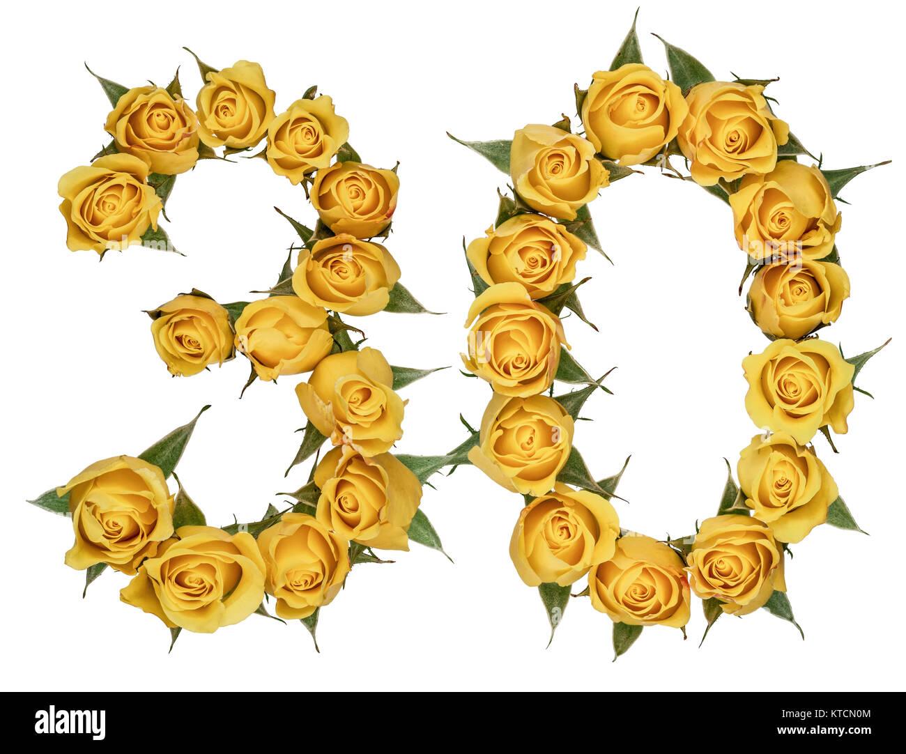 Arábigos, 30, 34, de flores amarillas de rose, aislado sobre fondo blanco. Imagen De Stock