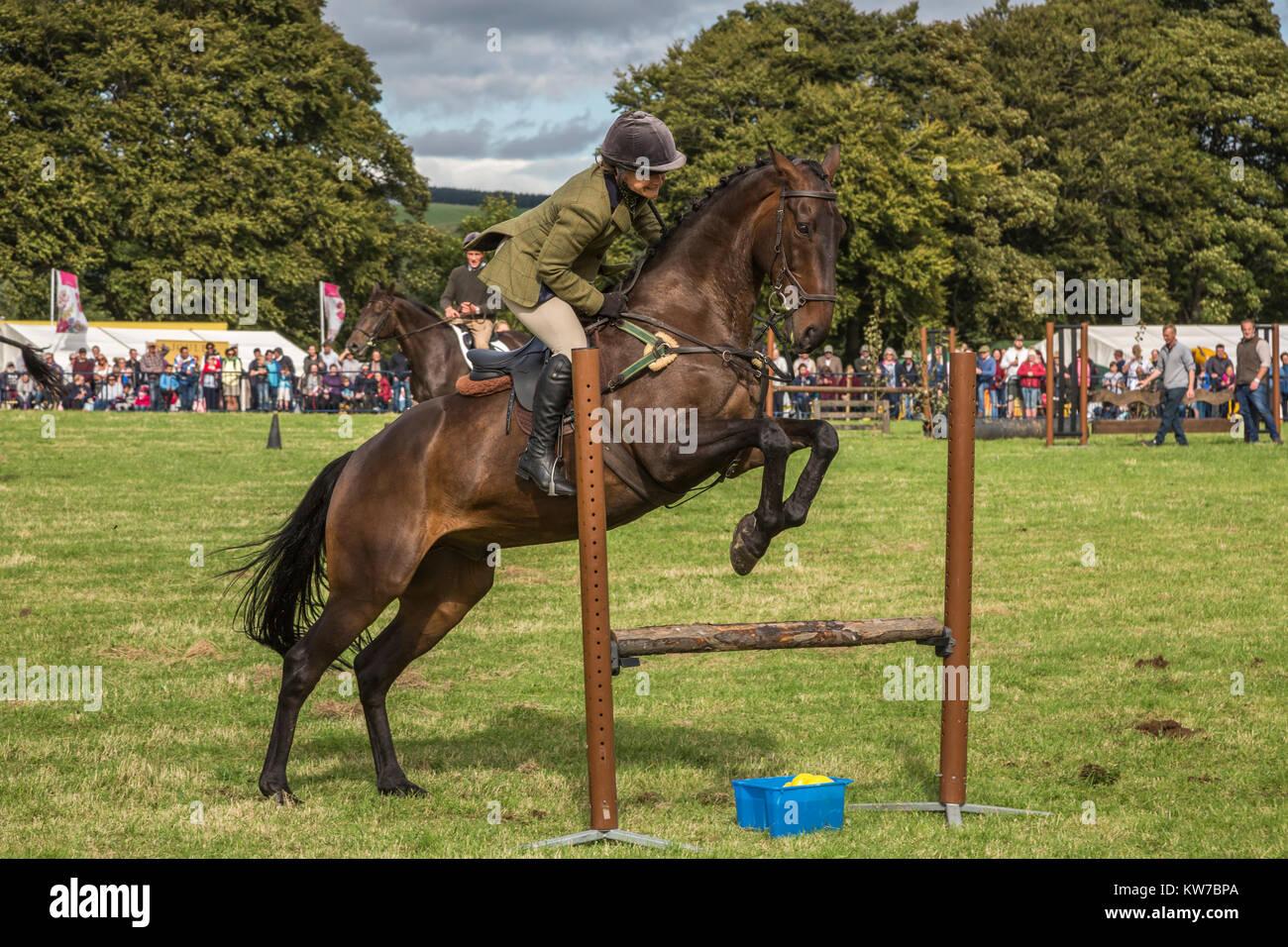 Show Jumping, Bellingham Show, Bellingham, Northumberland, Reino Unido, agosto de 2017 Imagen De Stock