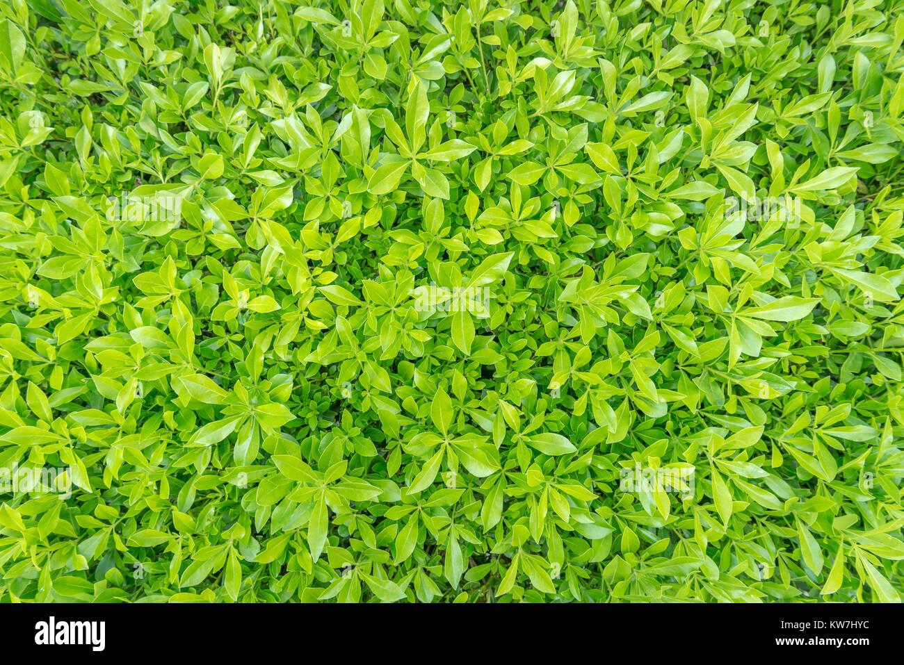 Imagen cercana de primavera frescos antecedentes la hierba verde. Imagen De Stock