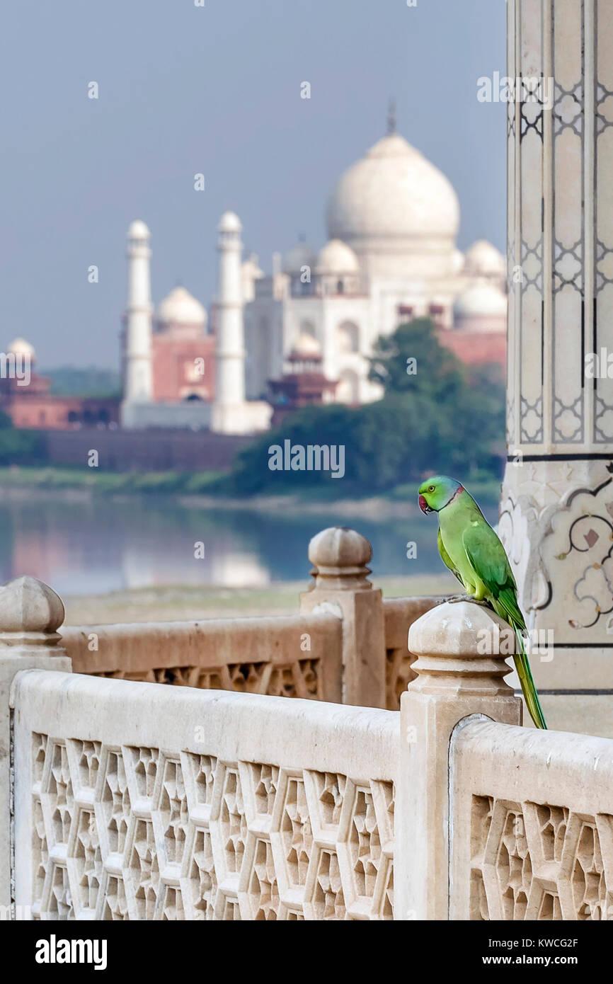 Parrot contra Taj Mahal Palace, Agra, Uttar Pradesh, India Imagen De Stock