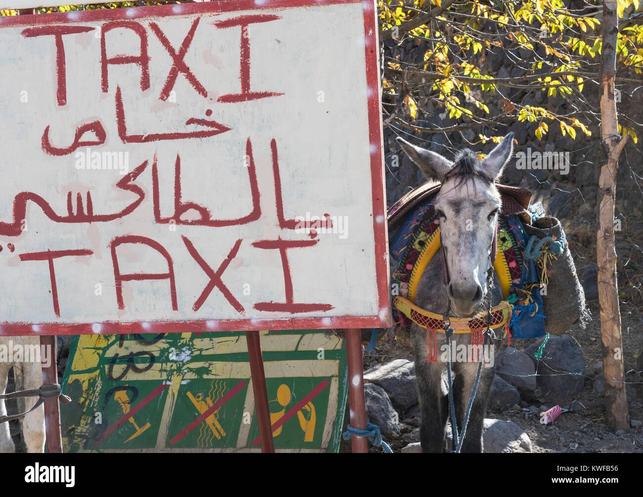 Mule Taxi carteles, Imlil, el Alto Atlas. Imagen De Stock