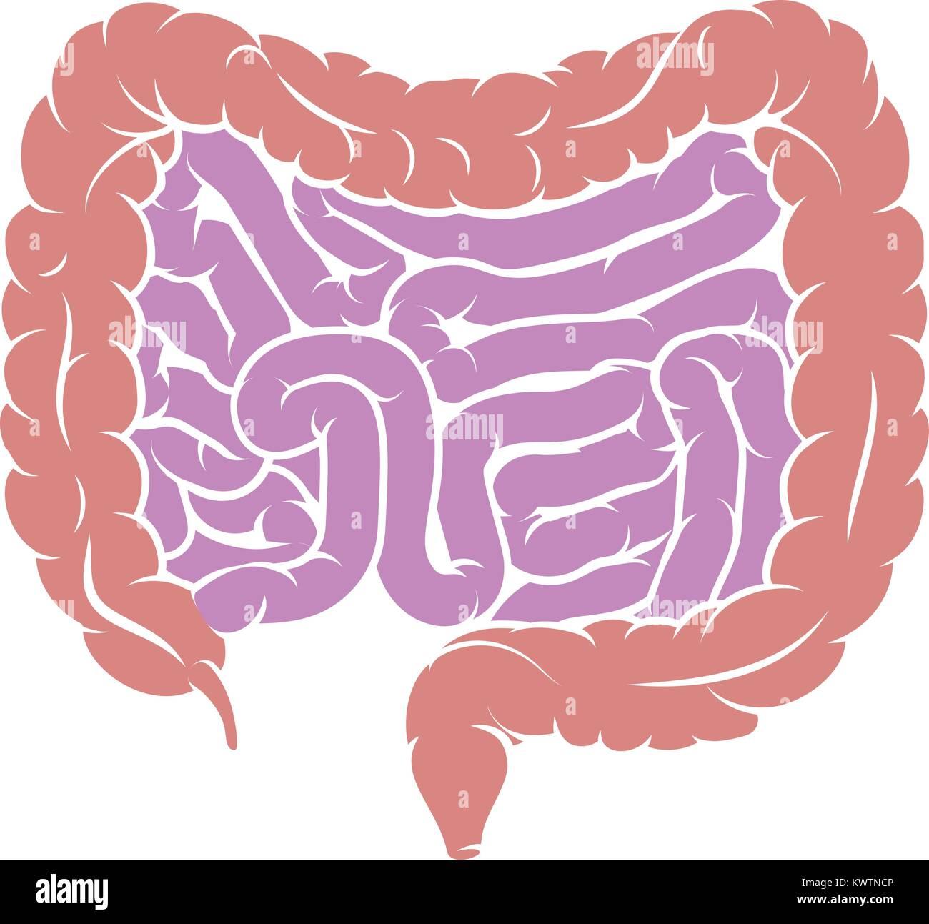 Digestive System Cartoon Imágenes De Stock & Digestive System ...