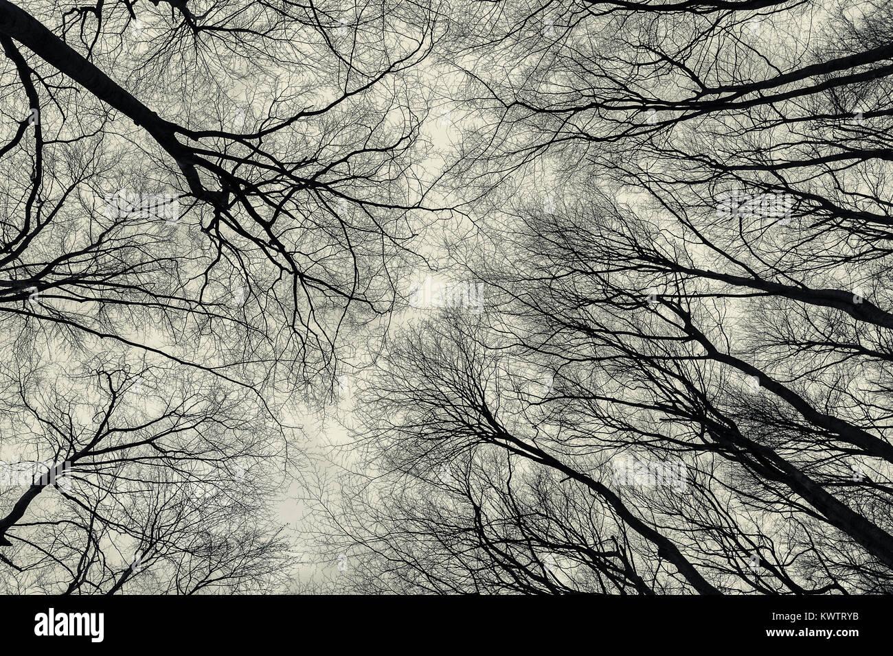 Vista inferior de los árboles en el bosque de finales de otoño. Resumen Antecedentes La atmósfera melancólica. Foto de stock