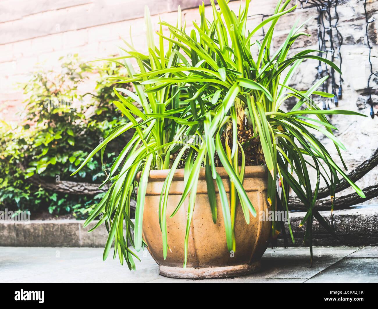 Bonito Patio De Terracota Maceta Con Plantas Verdes Contenedor De - Plantas-verdes-exterior