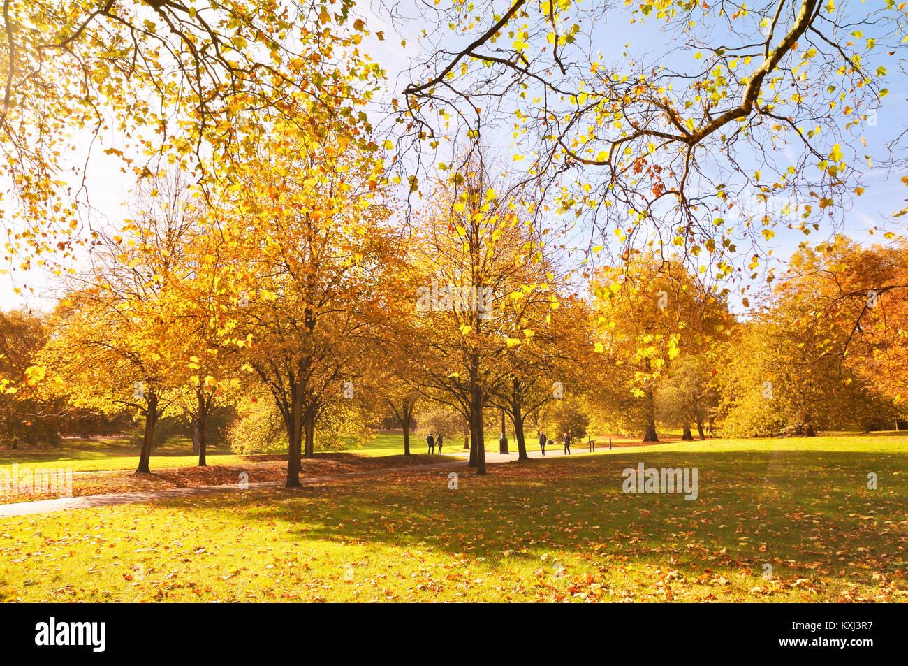 Green Park, Londres. Una pareja joven camina de la mano de coloridos árboles en un hermoso día soleado en otoño. Foto de stock