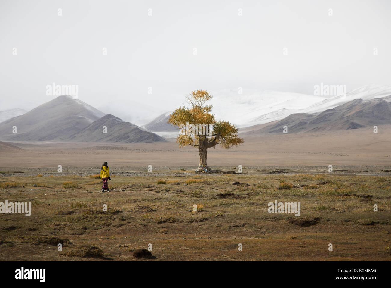 Solitario árbol hojas Amarillo otoño invierno nublado brumosas montañas nevadas praderas de las estepas de Mongolia Foto de stock