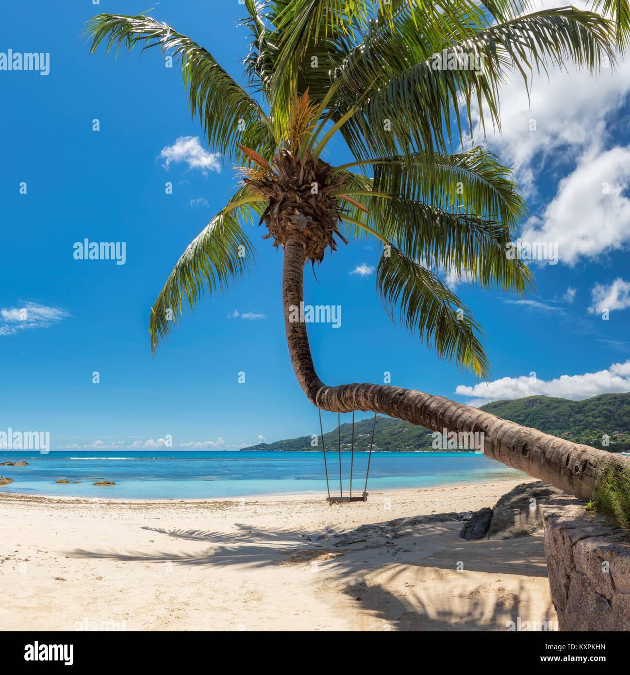Palmera tropical beach en Seychelles, Mahe Island. Foto de stock