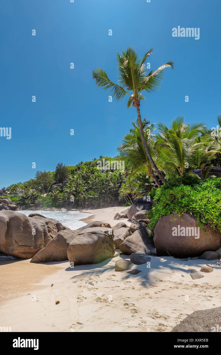 Las palmeras en la playa tropical exótica. Imagen De Stock
