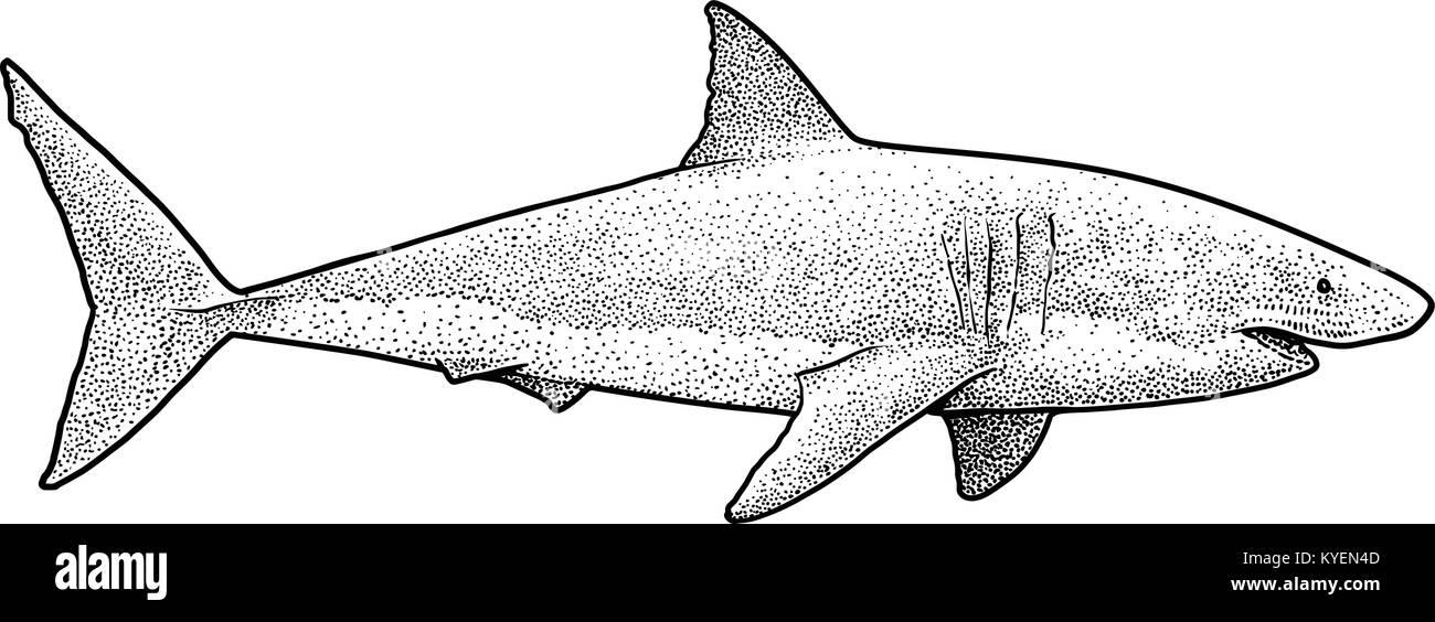 Shark Drawing Imágenes De Stock & Shark Drawing Fotos De Stock - Alamy