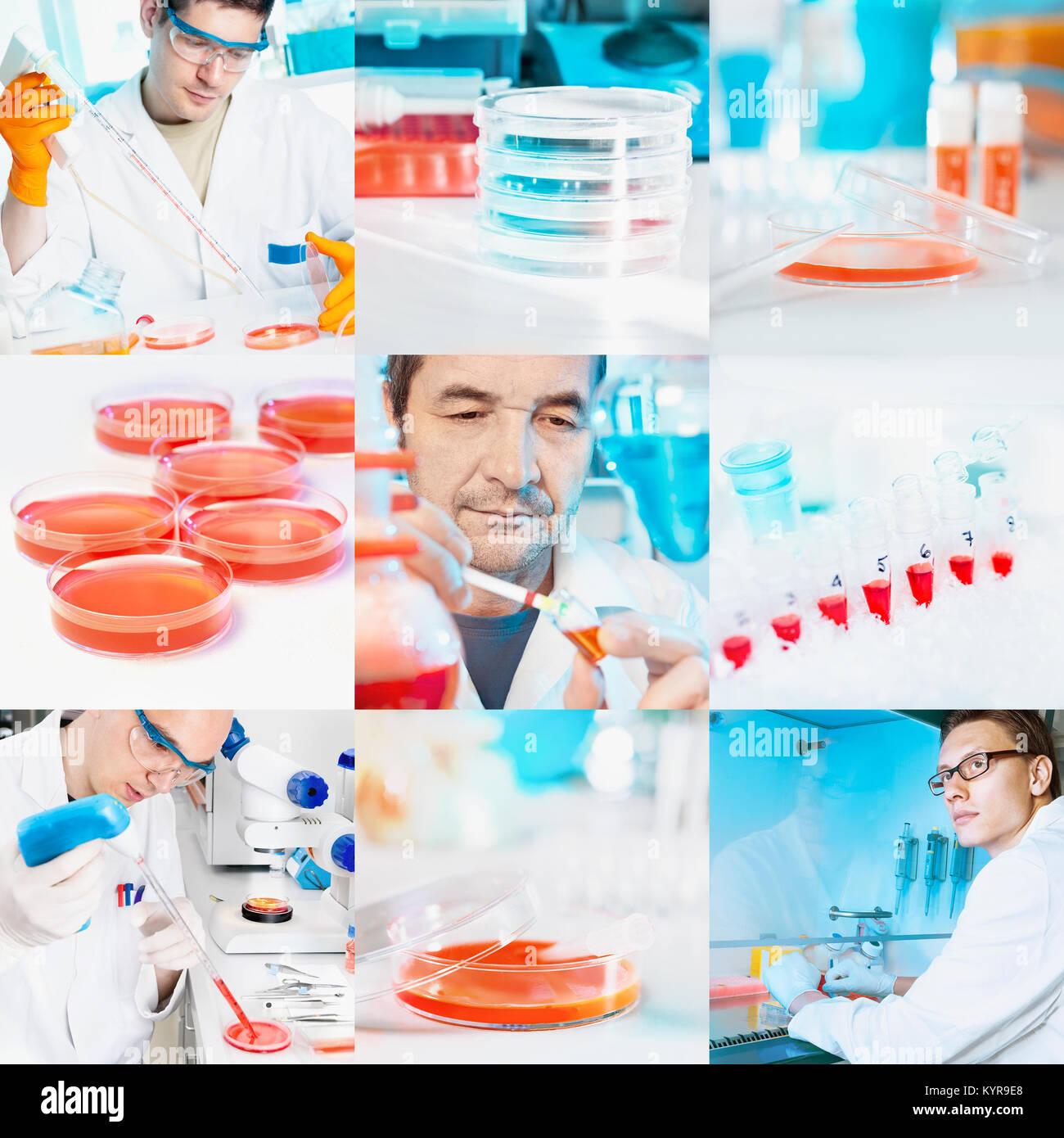 Los científicos realizan experimentos con cultivos celulares, collage Foto de stock