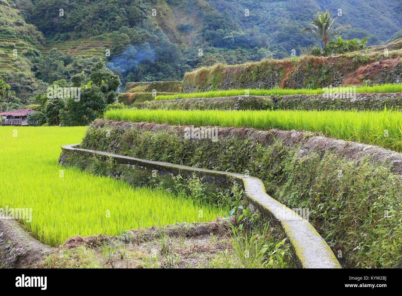 Las Terrazas De Arroz De Filipinas El Cultivo De Arroz En