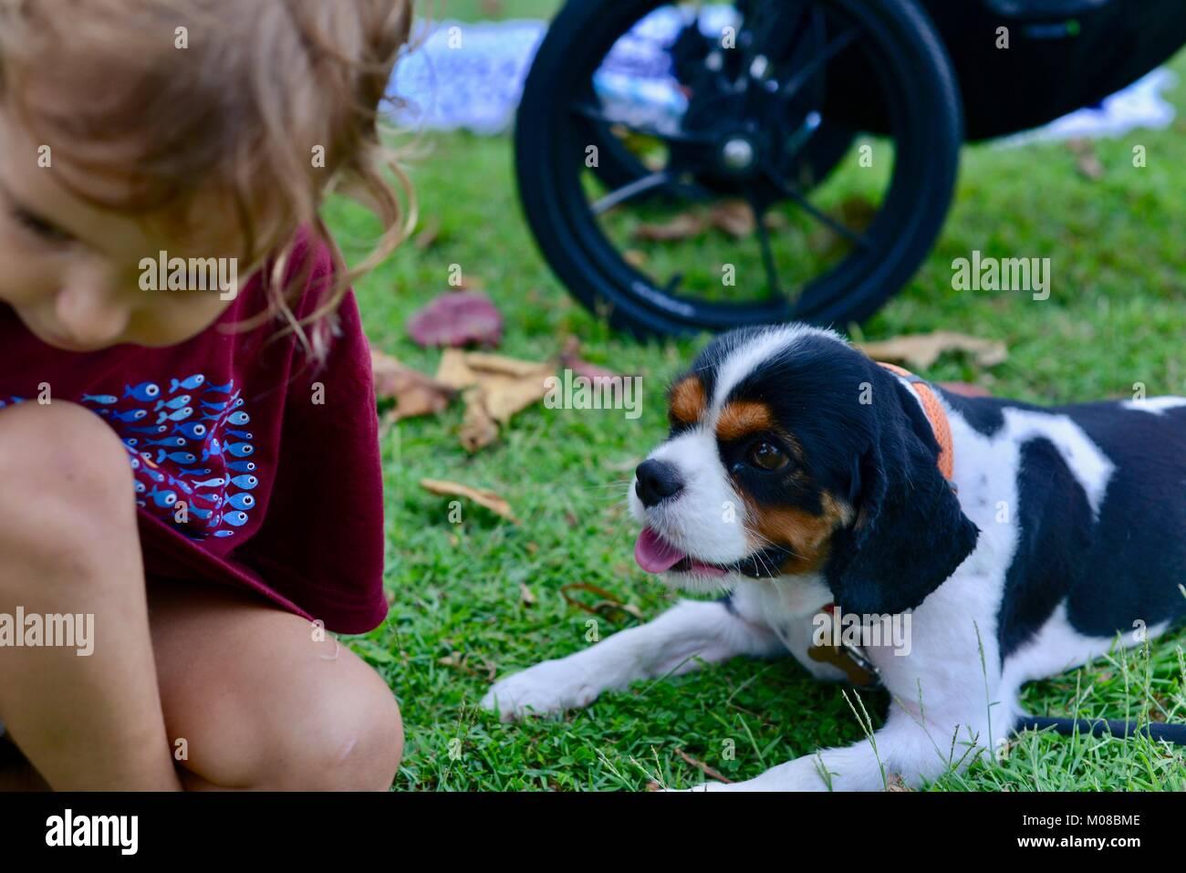 Joven y perros como compañeros, Townsville, Queensland, Australia Imagen De Stock