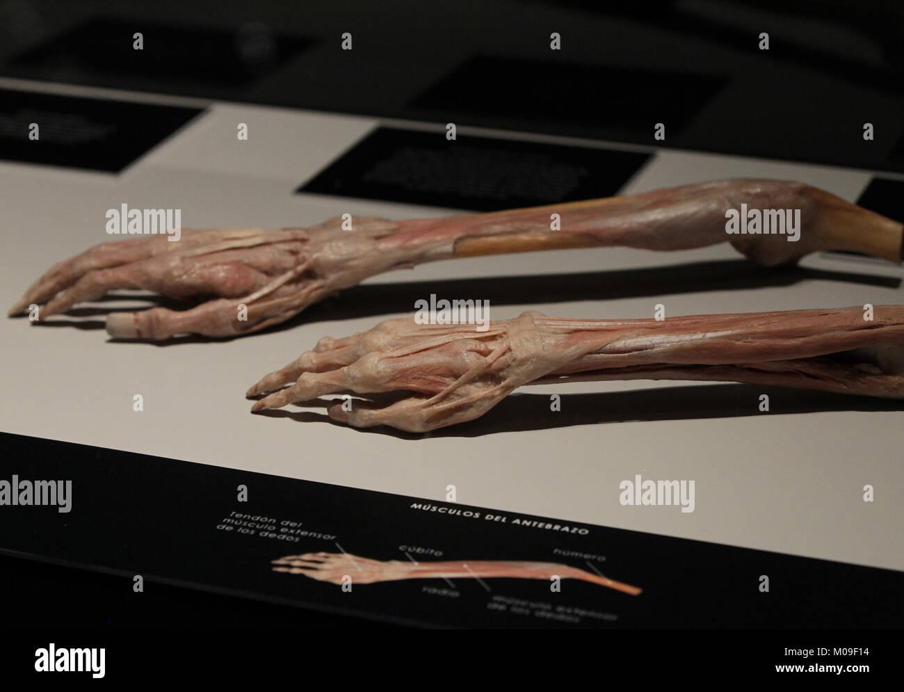 Una vista de uno de los fragmentos en el exibition \'Nuestro cuerpo ...