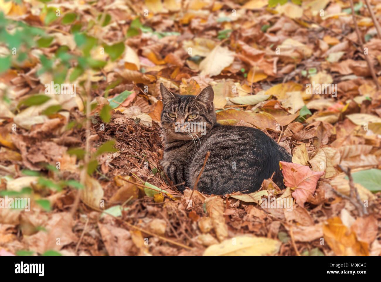 Adorable gato sin hogar solitario en la temporada de otoño Foto de stock