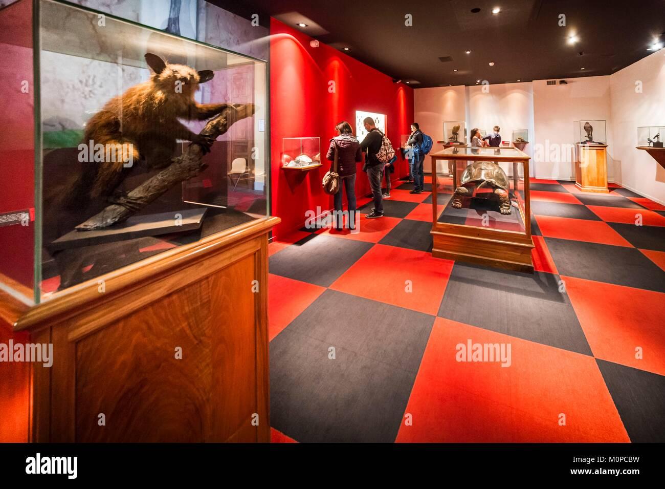 Francia,Isere,Museo de Grenoble,Hall de especies en peligro de extinción o han desaparecido Imagen De Stock