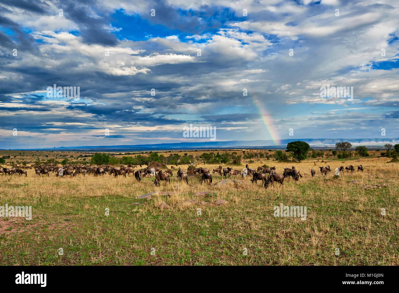 Rainbow y ñus, el paisaje del Parque Nacional del Serengeti, sitio del patrimonio mundial de la UNESCO, Tanzania, Foto de stock