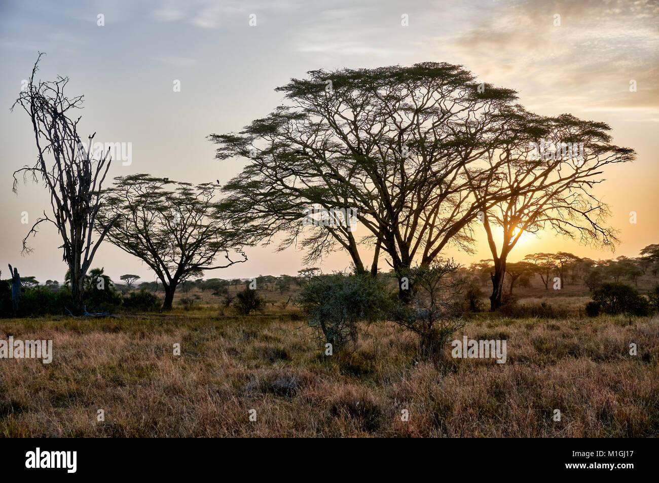 Amanecer en el Parque nacional Serengeti, sitio del patrimonio mundial de la UNESCO, Tanzania, África Foto de stock