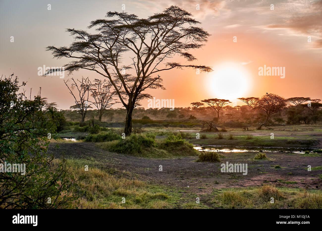 Amanecer en el Parque nacional Serengeti, sitio del patrimonio mundial de la UNESCO, Tanzania, África Imagen De Stock