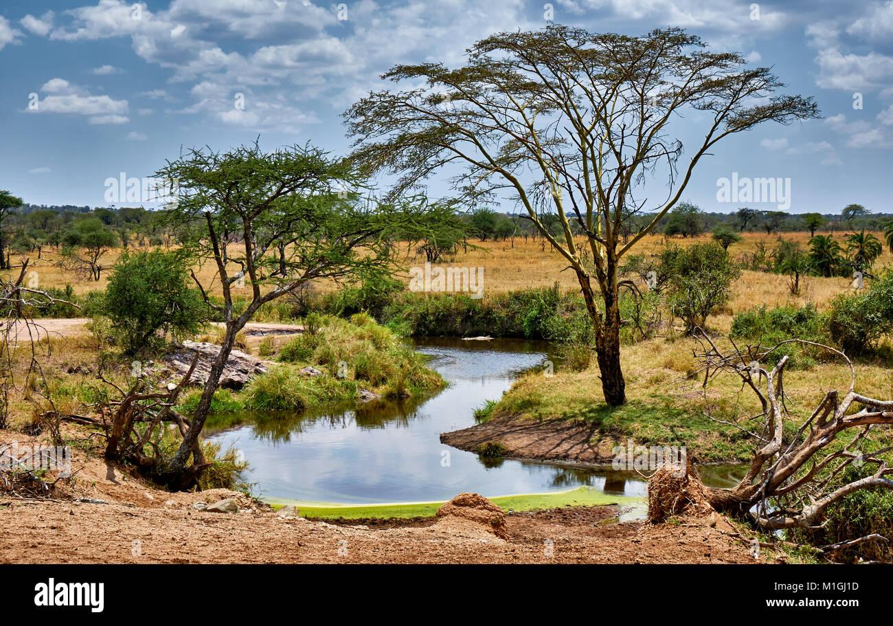 El paisaje del Parque Nacional del Serengeti, sitio del patrimonio mundial de la UNESCO, Tanzania, África Foto de stock