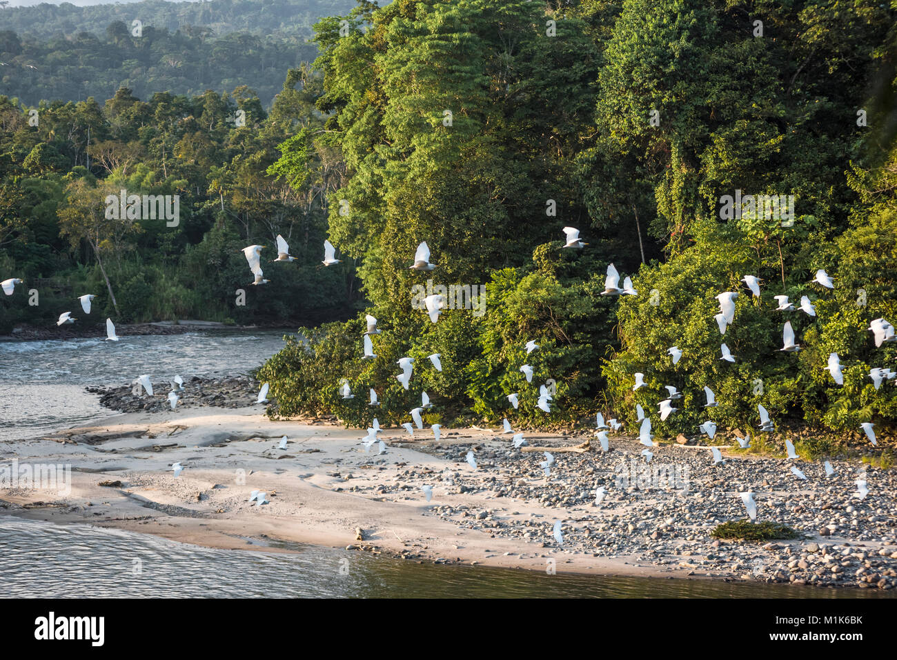 Selva Amazónica. Río Misahuallí. La provincia de Napo, Ecuador Foto de stock