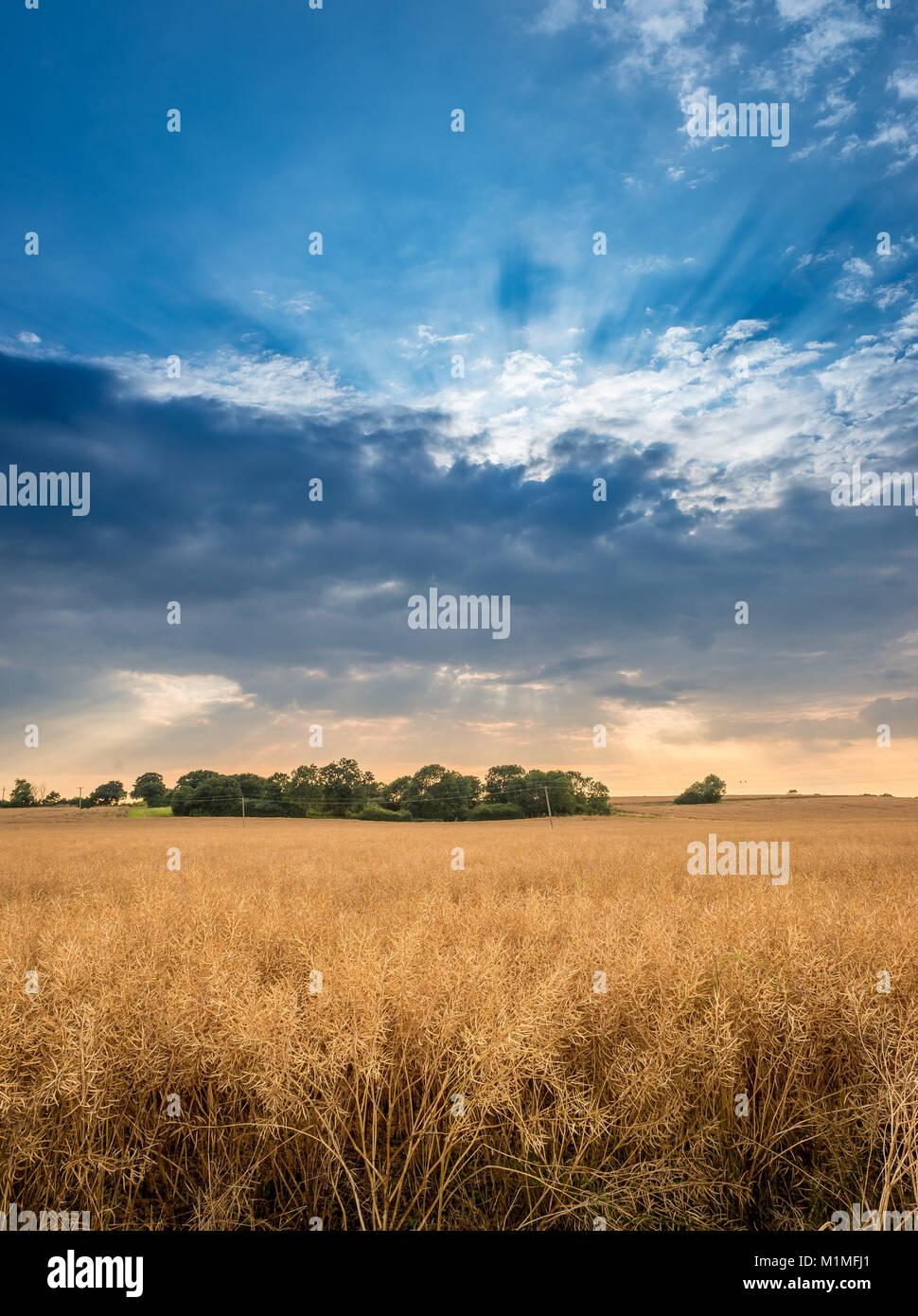 Un típico paisaje agrícola de campos de labranza en el borde de los Lincolnshire Fens cerca de Bourne, Sur de Lincolnshire, Foto de stock