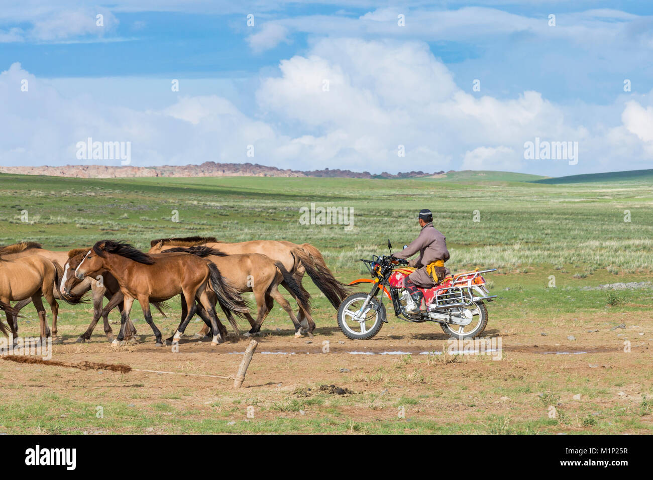 Hombre nómada mongol en moto encuentro caballos, Media provincia de Gobi, Mongolia, Asia Central, África Foto de stock
