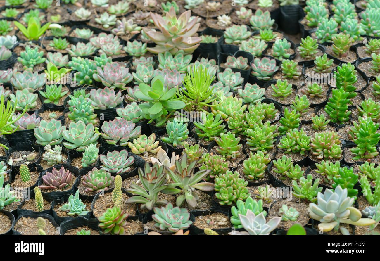 Jardineras de plantas suculentas en el jardn Se trata de una
