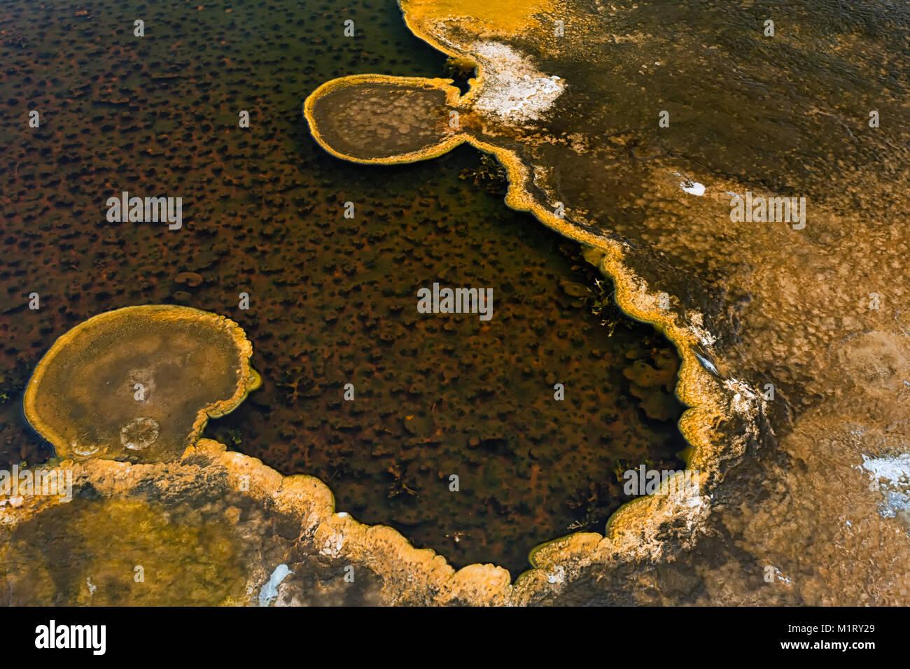 Algea ama el agua caliente de resortes de alimentación térmica y crecer en el agua de una piscina un poco más profunda. Foto de stock