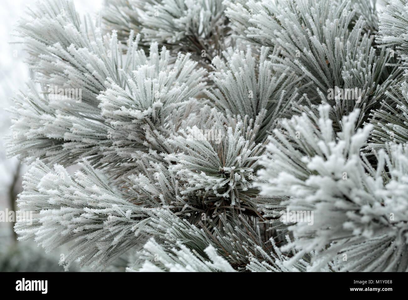 La impresión en el gélido invierno día Foto de stock