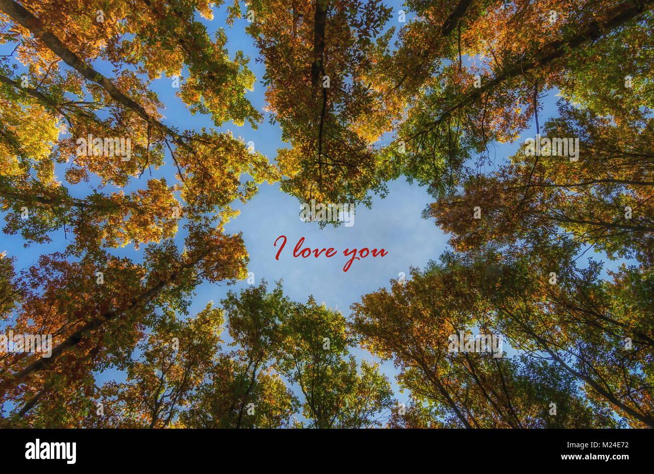 Árboles de la corona con forma de corazón para el día de San Valentín, con el texto: Te amo Foto de stock
