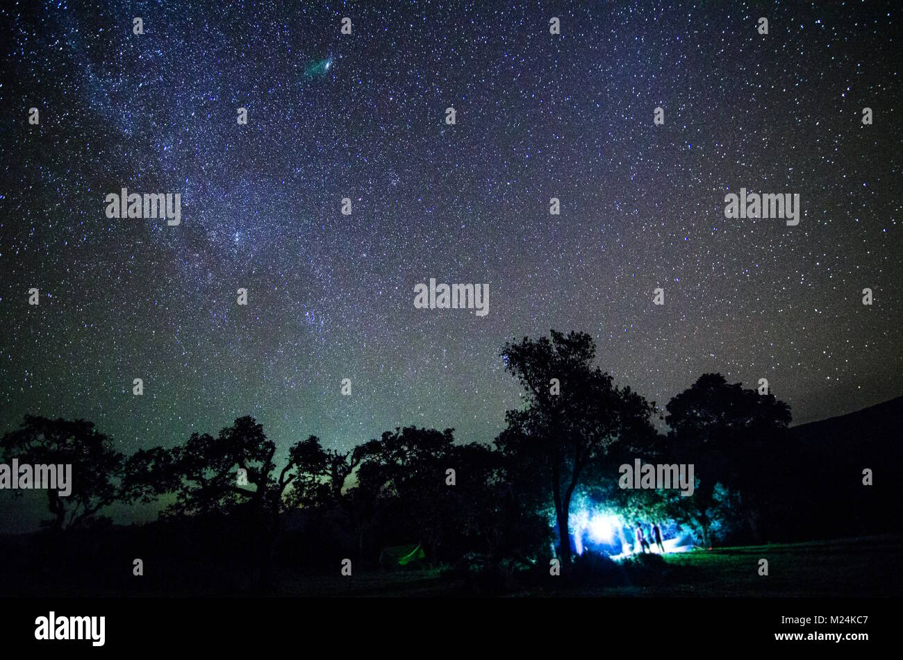 Vía Láctea y el árbol en el campo. Poco de árbol contra la noche ...