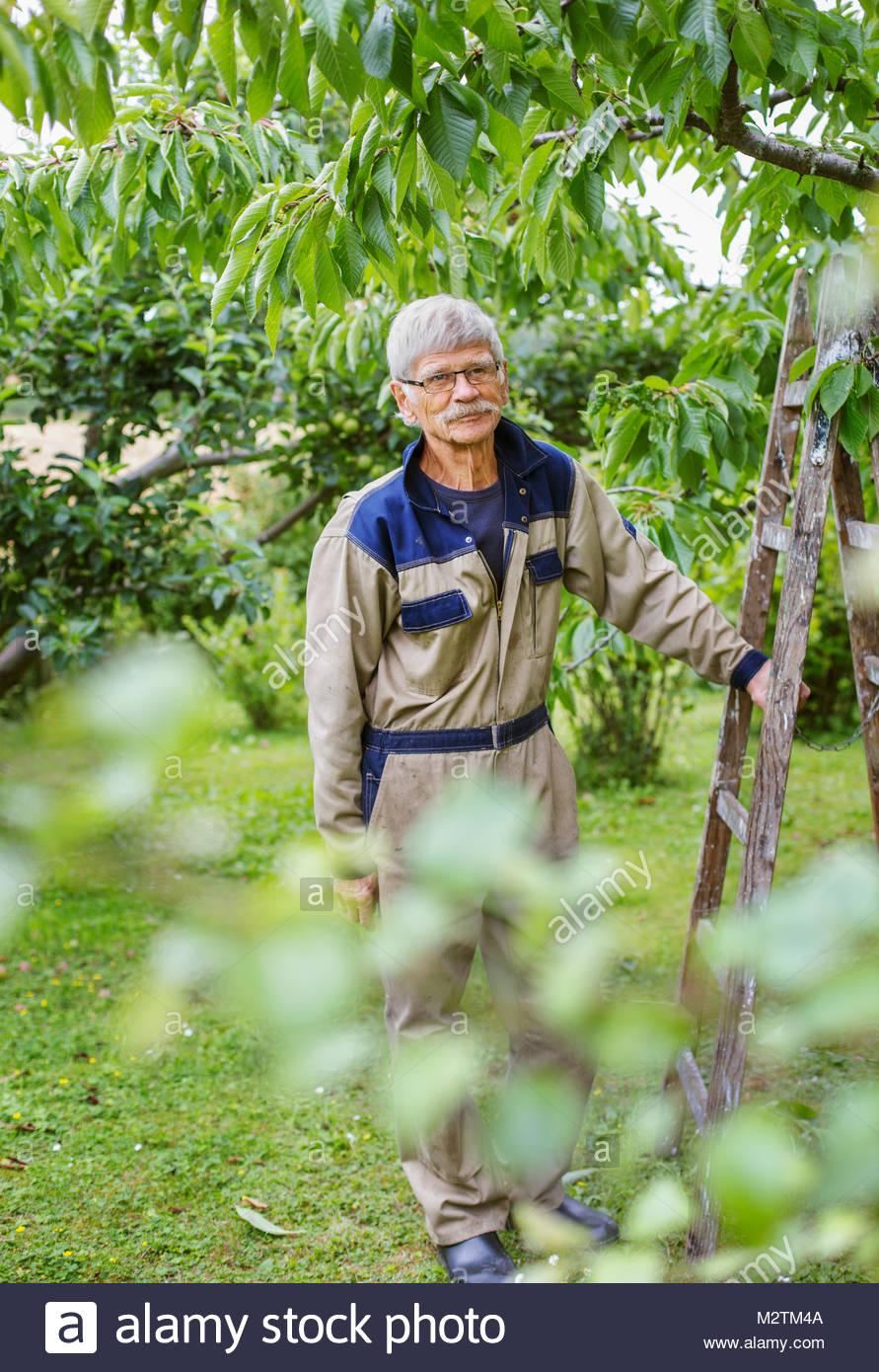 Hombre sujetando la escalera en huerto Imagen De Stock