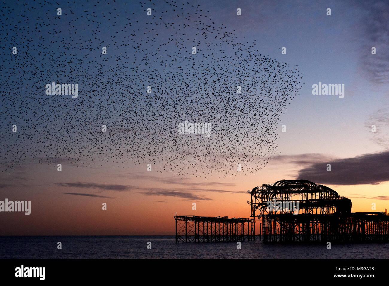 Murmuration sobre las ruinas del West Pier de Brighton, en la costa sur de Inglaterra. Una Bandada de estorninos aterriza sobre el muelle al atardecer antes de posarse. Foto de stock